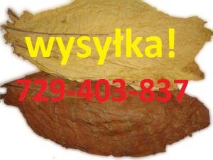 liscie tytoniu Virginia Burley WYSYLKA KURIER!