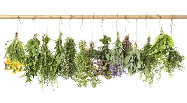 """""""Rośliny lecznicze i ich stosowanie"""" – zaproszenie na wykład"""