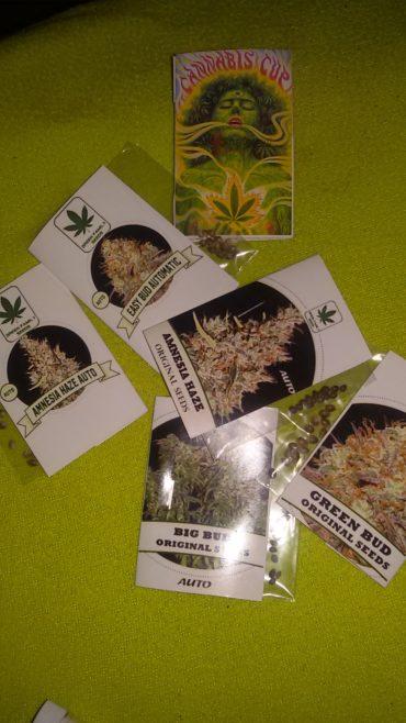 green family seeds nasiona konopi