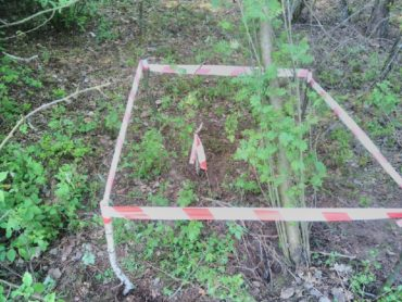 Pocisk artyleryjski w lesie
