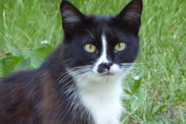Bezdomna kotka szuka domu